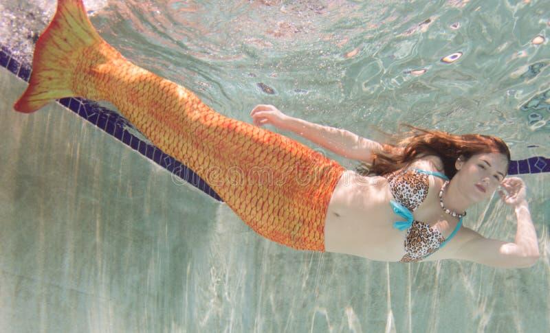 Una sirena con e una coda arancio subacquea fotografia stock libera da diritti