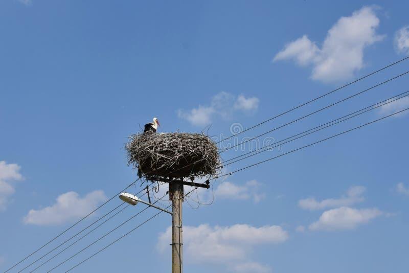Una situación de la cigüeña en su jerarquía en el poste de la electricidad con la lámpara de calle fotos de archivo