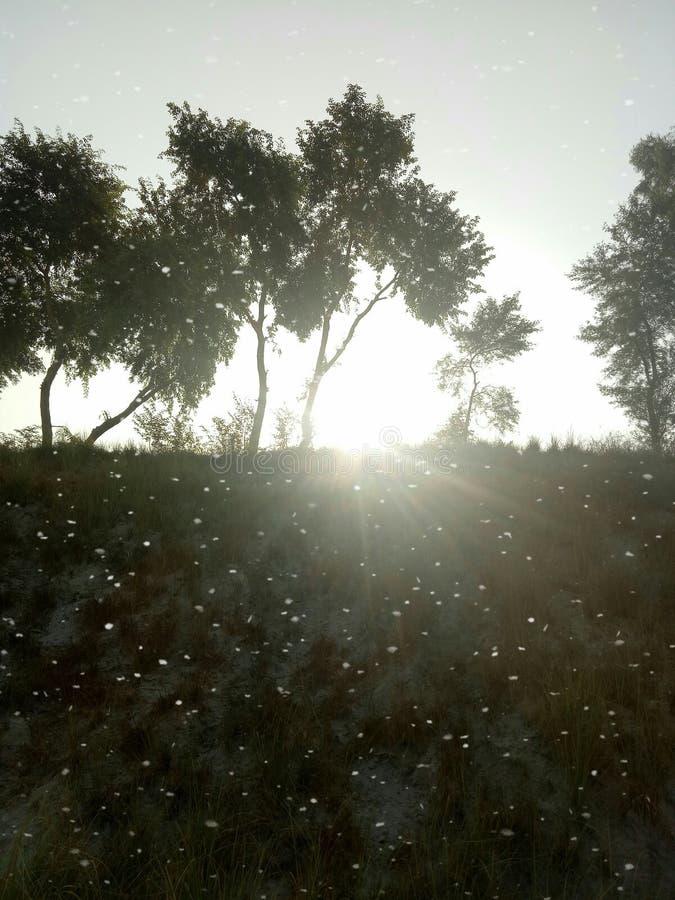 Una sol hermosa fotos de archivo