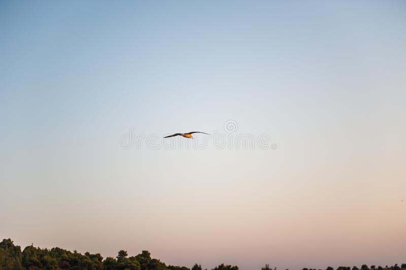 Una sola gaviota que se desliza y que vuela sobre el mar Cielo de la puesta del sol de la tarde fotografía de archivo