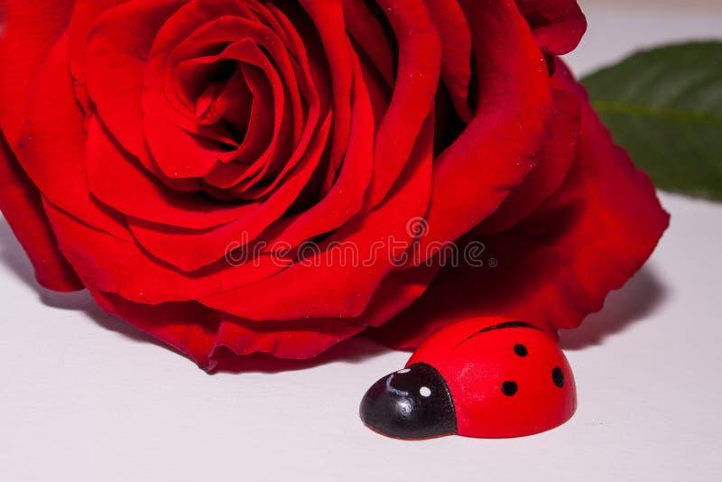 Una sola rosa del rojo con un pájaro de madera de la señora fotografía de archivo