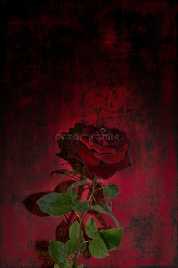 Una sola rosa roja contra un negro, fondo melanc?lico rojo Postal, fondo para estar de luto, entierro foto de archivo libre de regalías