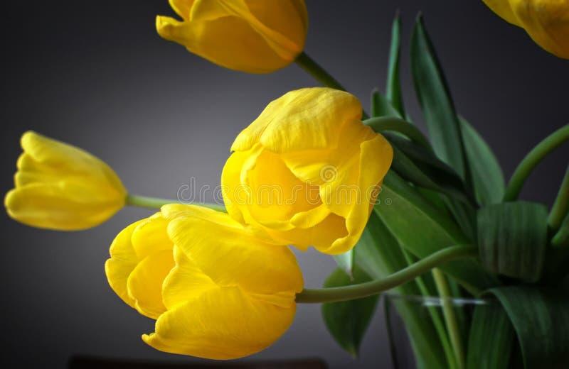 Una spruzzata di colore Quello giallo immagine stock