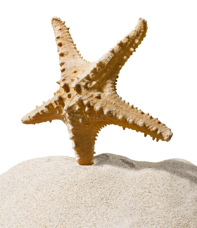 Download Una Stella Marina Isolata Su Fondo Immagine Stock - Immagine di pesci, biologia: 117979237