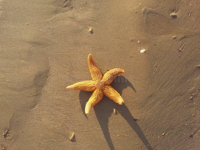 Una stella marina nella sabbia fotografie stock