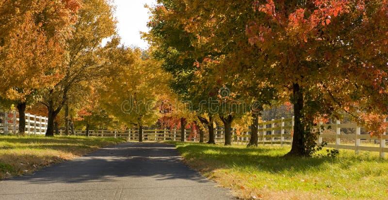 Una strada allineata albero nella caduta immagine stock libera da diritti