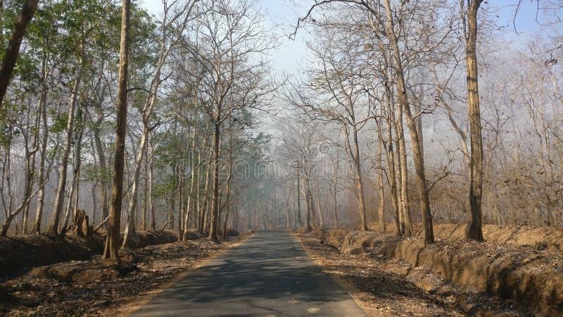 Una strada attraverso la foresta di Dandeli fotografia stock