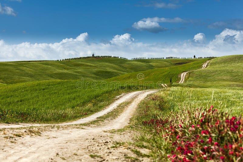 Una strada campestre sulla collina di rotolamento in un paesaggio rurale, Toscana fotografia stock libera da diritti