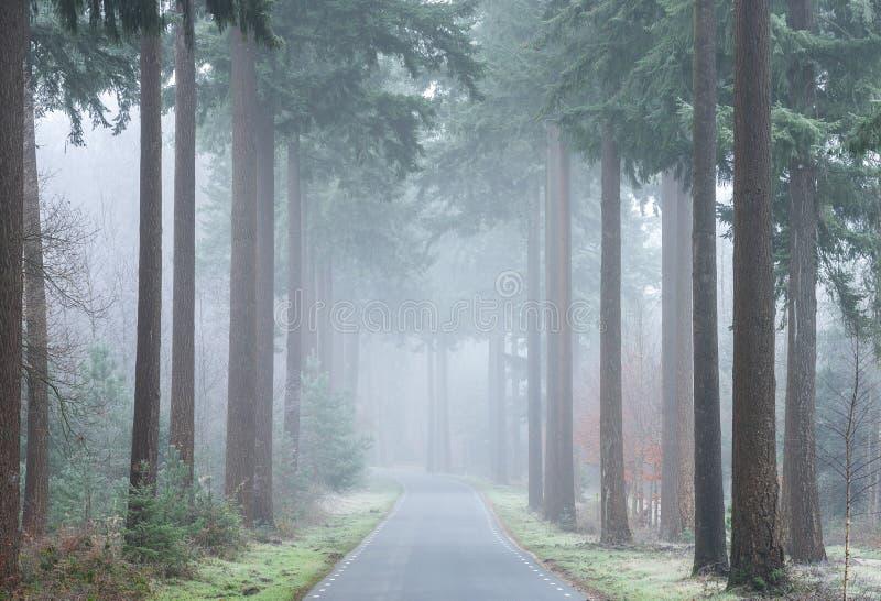 Una strada con un più forrest nebbioso in autunno immagini stock