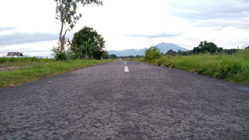 Una strada diritta divide le risaie del villaggio immagine stock