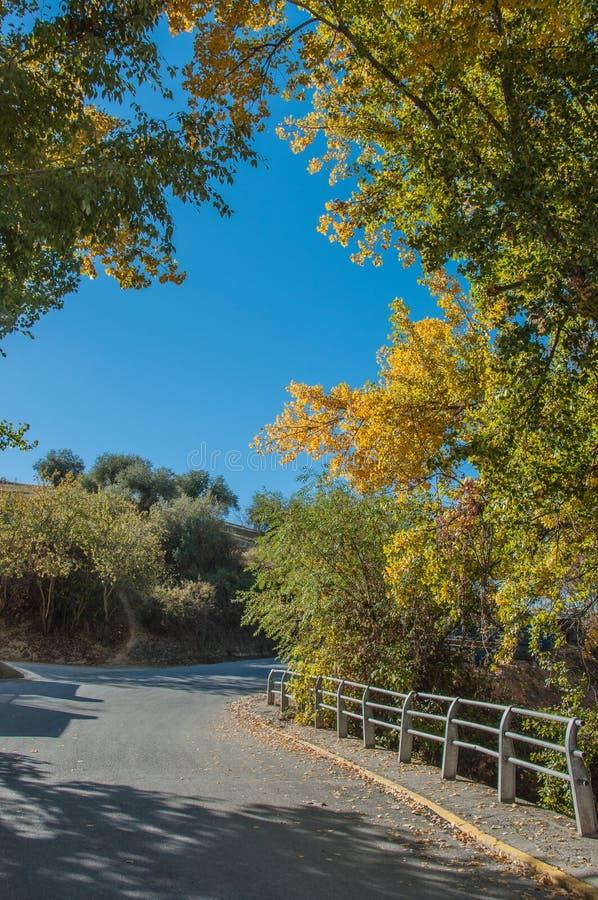 Una strada fra le file degli alberi, cielo blu luminoso d'inquadramento, immagine stock libera da diritti