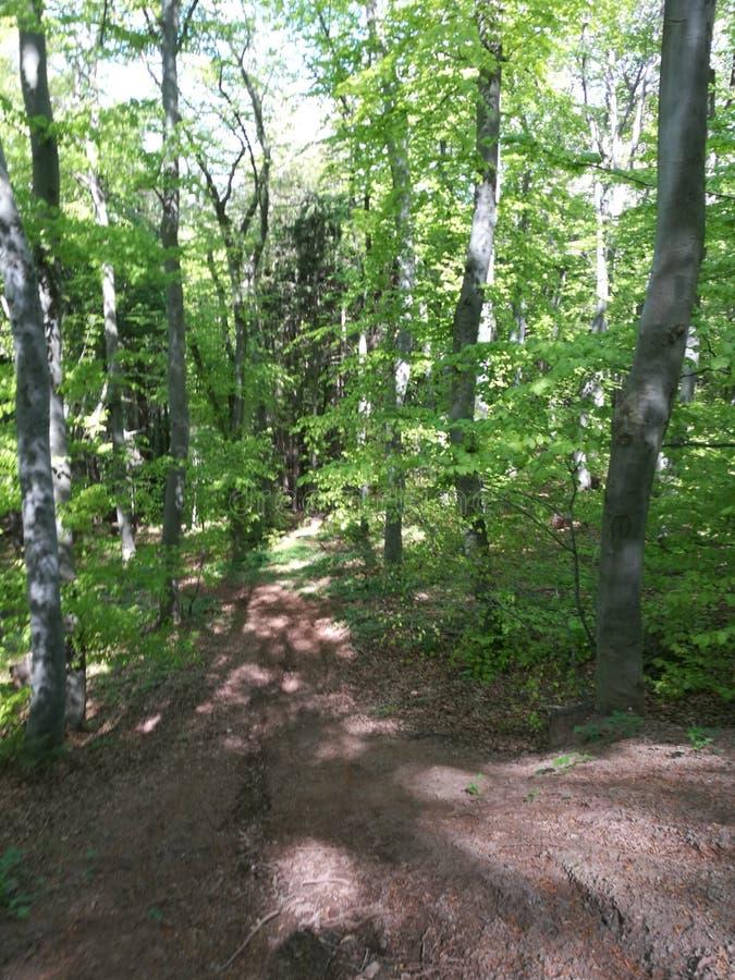 Una strada nella foresta fotografie stock libere da diritti