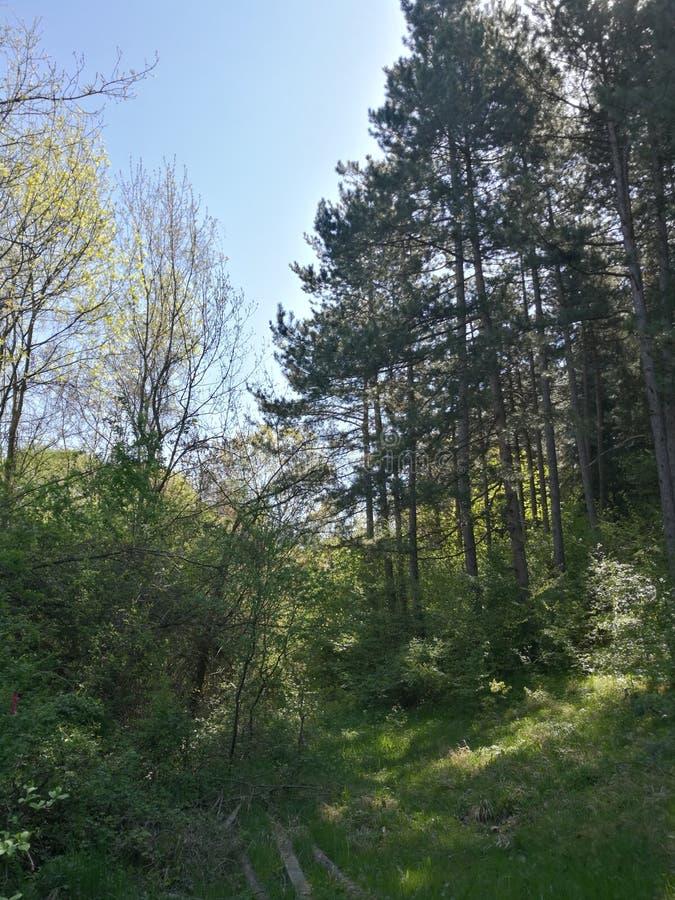 Una strada nella foresta fotografia stock