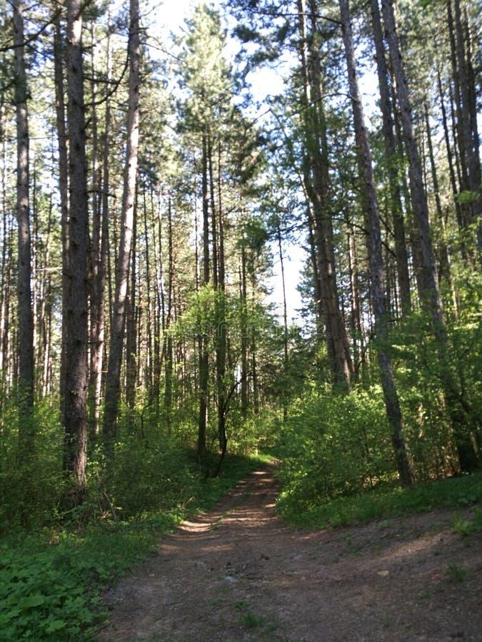 Una strada nella foresta fotografia stock libera da diritti