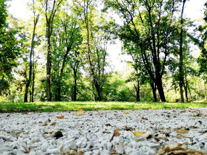 Una strada nella foresta vicino agli alberi immagine stock