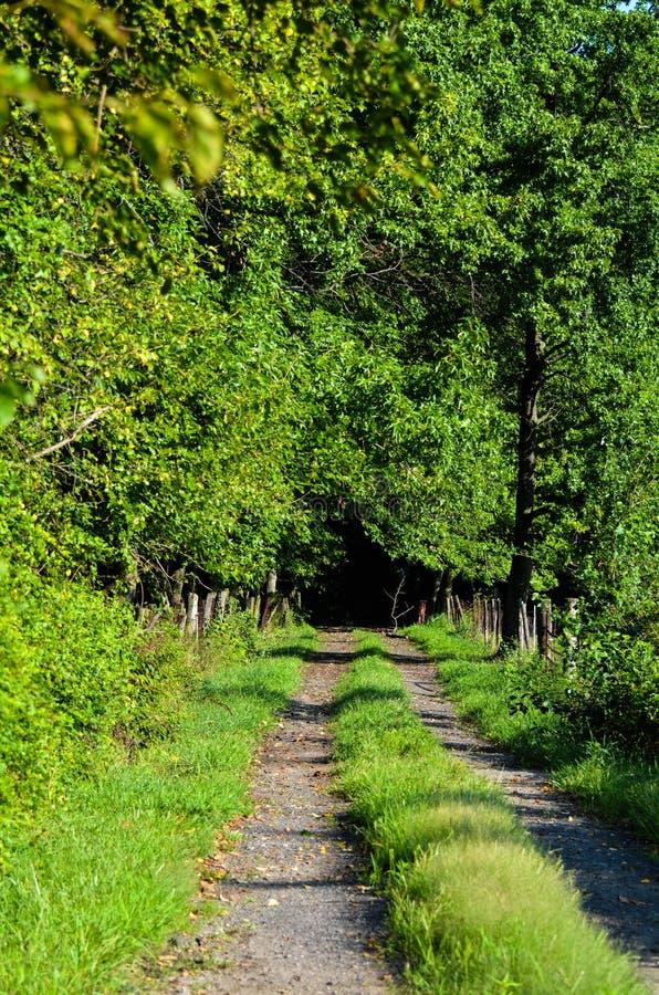 Una strada non asfaltata del vicolo che conduce nel legno fotografie stock libere da diritti