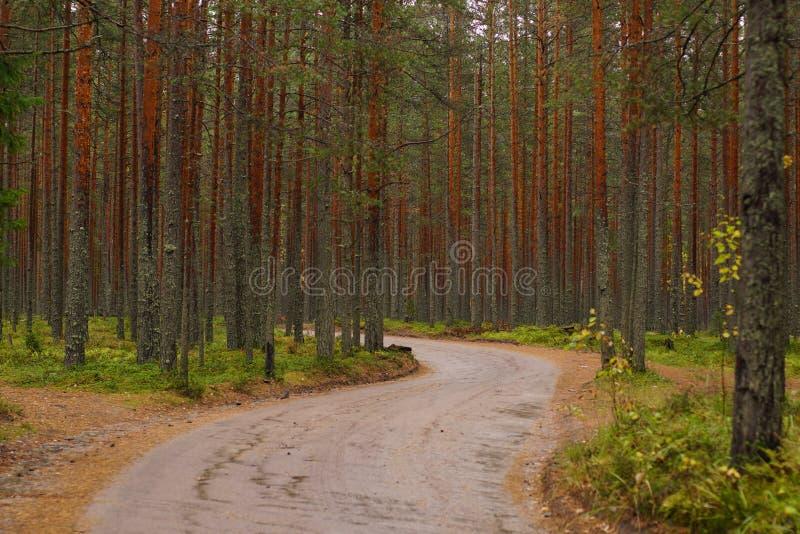 Una strada non asfaltata di bobina dopo un'abetaia, la stagione di autunno fotografia stock