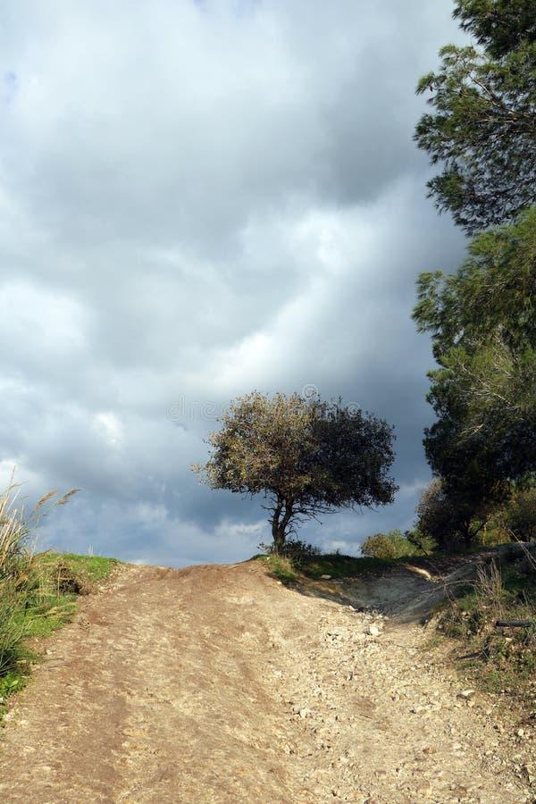 Una strada non asfaltata porta con un albero nella distanza immagini stock libere da diritti