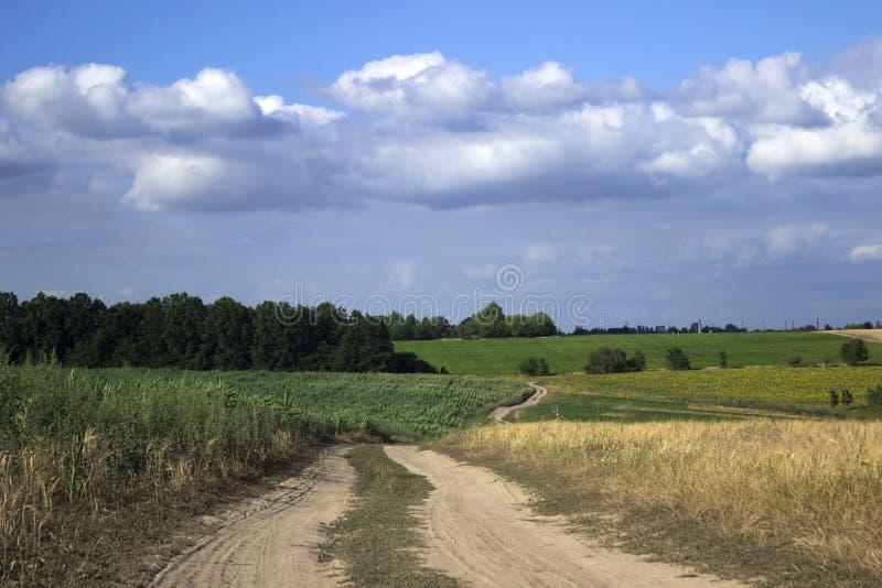 Una strada non asfaltata in un campo fra il grano, i girasoli ed il cereale maturi fotografia stock libera da diritti