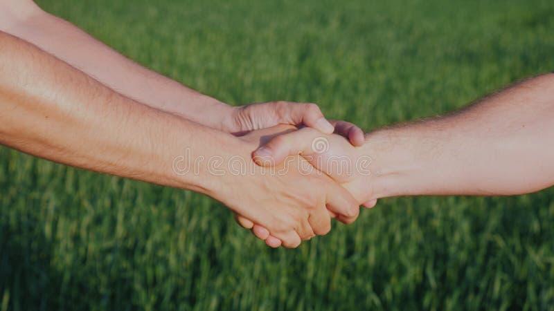 Una stretta di mano amichevole di due mani maschii Contro lo sfondo di un giacimento di grano verde fotografia stock