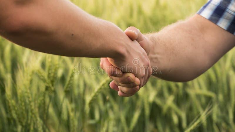 Una stretta di mano costante fra due agricoltori maschii sui precedenti di un giacimento di grano fotografie stock