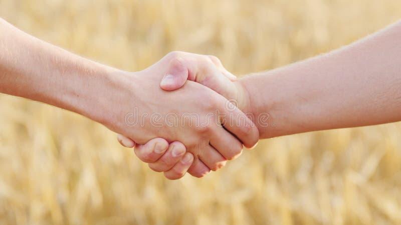 Una stretta di mano maschio di due agricoltori contro lo sfondo di un giacimento di grano giallo fotografia stock