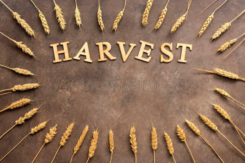 Una struttura delle orecchie dorate del grano e una parola dalle lettere di legno raccolgono su un fondo rustico scuro Copi lo sp immagine stock