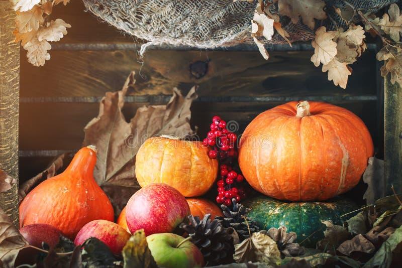Una tabla adornada con las calabazas, festival de la cosecha, acción de gracias feliz fotografía de archivo libre de regalías
