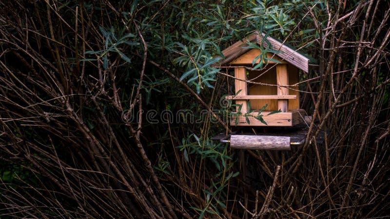 Una tabla del pájaro en un arbusto foto de archivo
