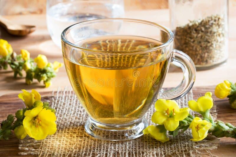Una taza de té del verbascum del mullein con el mullein fresco florece imagen de archivo