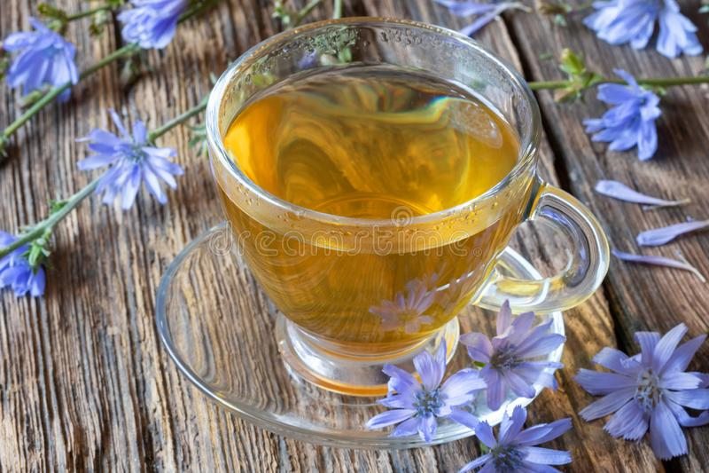 Una tazza del tè della cicoria con i fiori blu freschi della cicoria immagini stock
