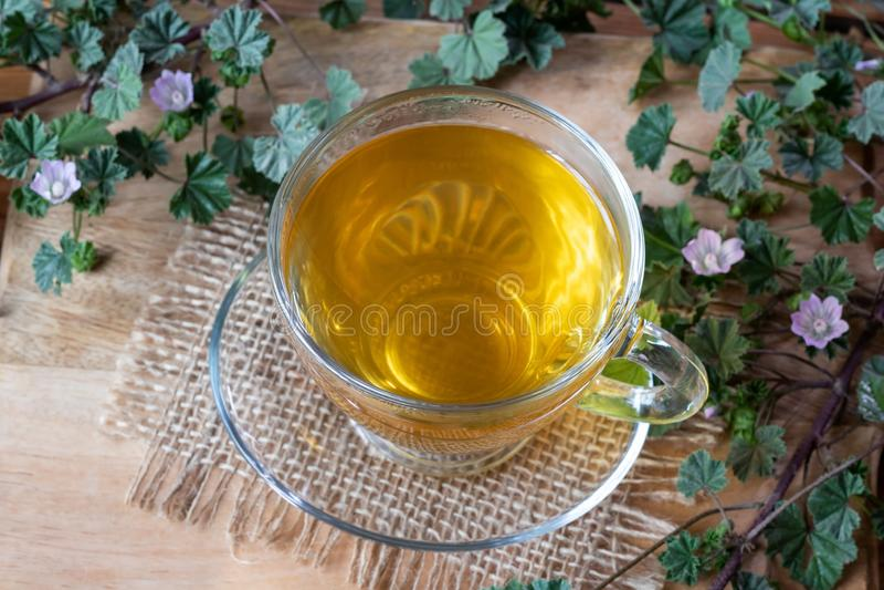 Una tazza del tè nano della malva con la pianta nana di fioritura fresca della malva immagini stock libere da diritti