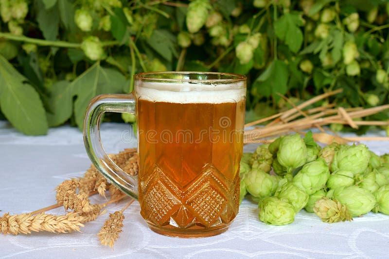 Una tazza di birra, delle spighette di grano e del luppolo fotografia stock