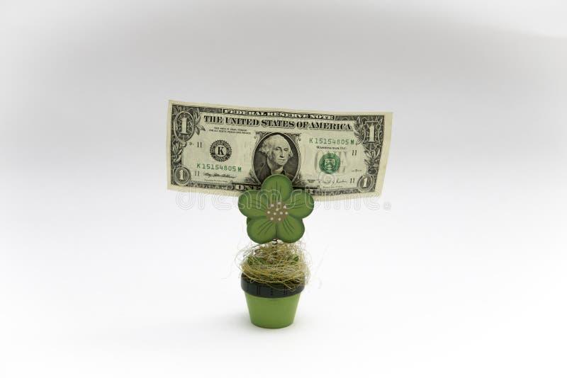 Una tenuta della banconota in dollari da una pianta di legno ai precedenti bianchi immagini stock libere da diritti