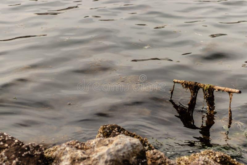 Una toma de color suave de un pantano - hay musgos verdes en metales foto de archivo libre de regalías