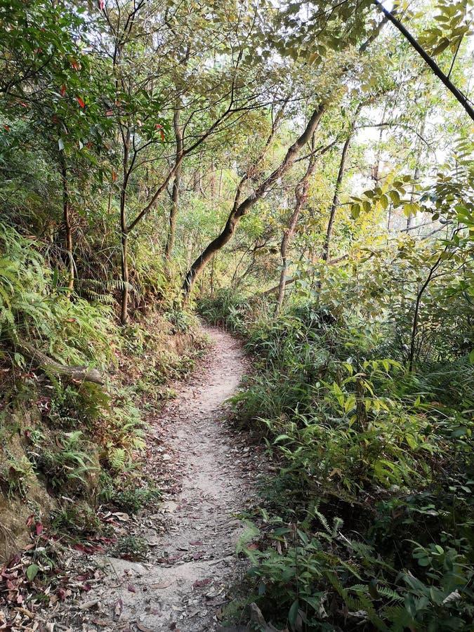 Una tortuosa strada di montagna con alberi su entrambi i lati fotografie stock