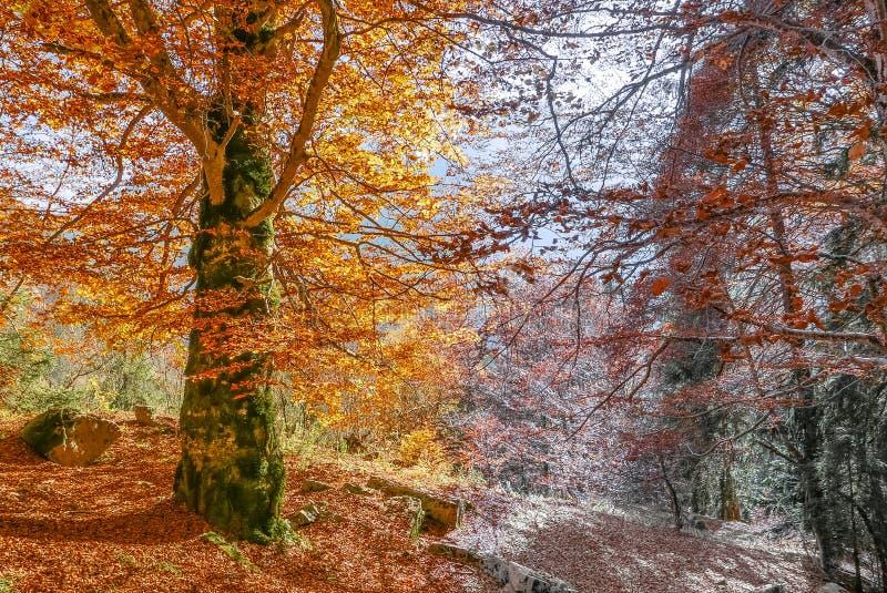 Una transizione di due stagioni a partire dall'autunno all'inverno fotografia stock libera da diritti
