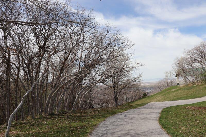 Una trayectoria de enrrollamiento y árboles gnarly deshojados imágenes de archivo libres de regalías
