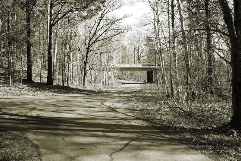 Una trayectoria de la bicicleta en las fracturas del bosque en diversas direcciones y un puente se ve de lejos foto de archivo libre de regalías