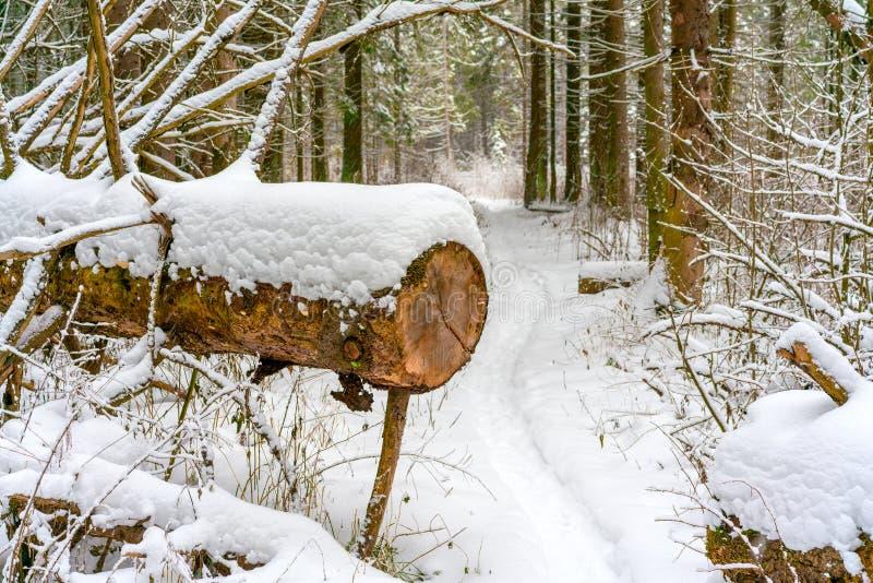 Una trayectoria en el bosque del invierno cruza un árbol de pino caido y aserrado fotos de archivo libres de regalías