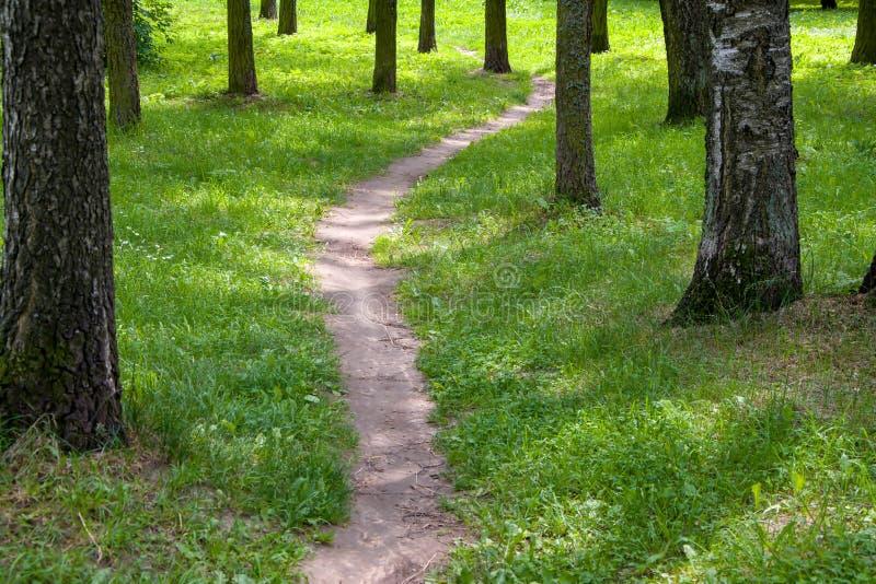 Una trayectoria en el parque entre los árboles, una trayectoria estrecha en el bosque del verano imágenes de archivo libres de regalías