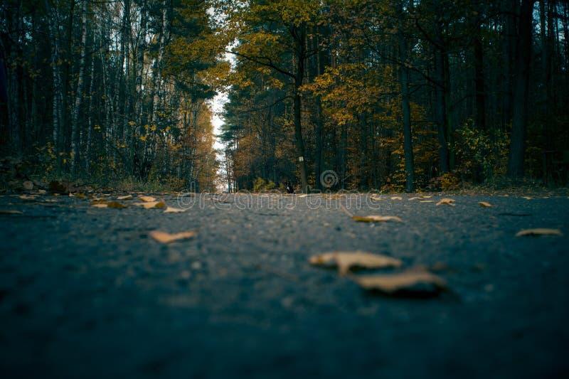 Una trayectoria en un bosque del otoño por completo de colores fotos de archivo libres de regalías