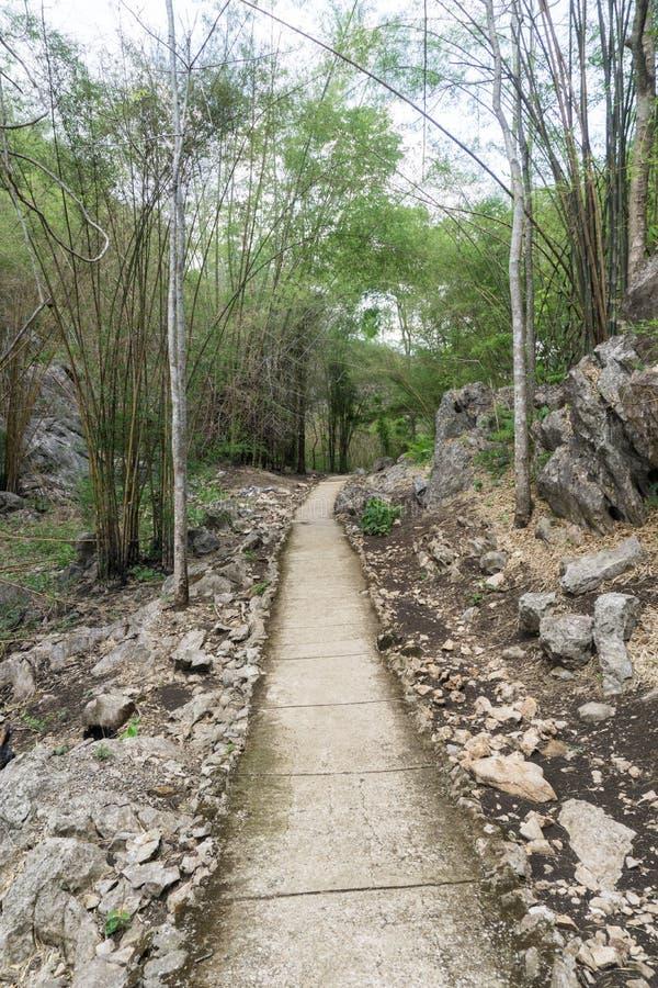 una trayectoria está en el bosque verde imagenes de archivo
