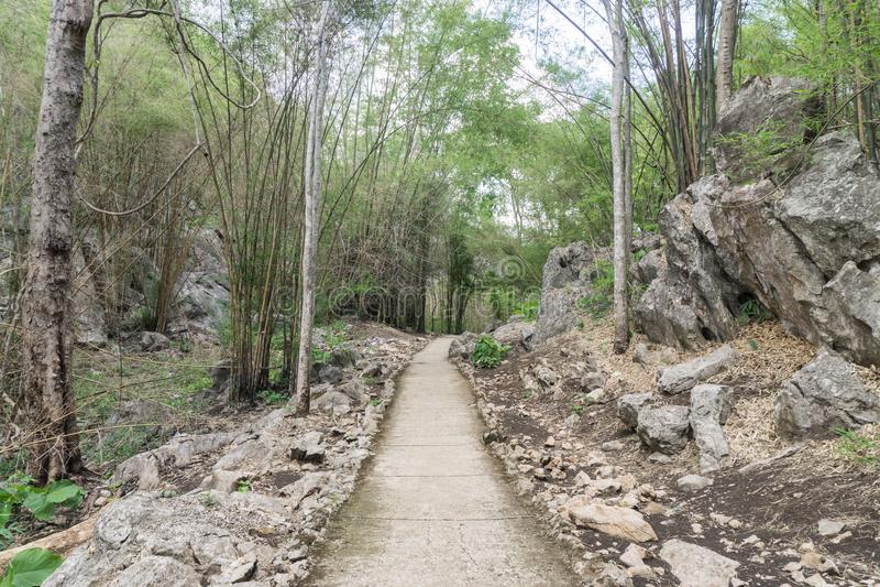 una trayectoria está en el bosque verde imagen de archivo
