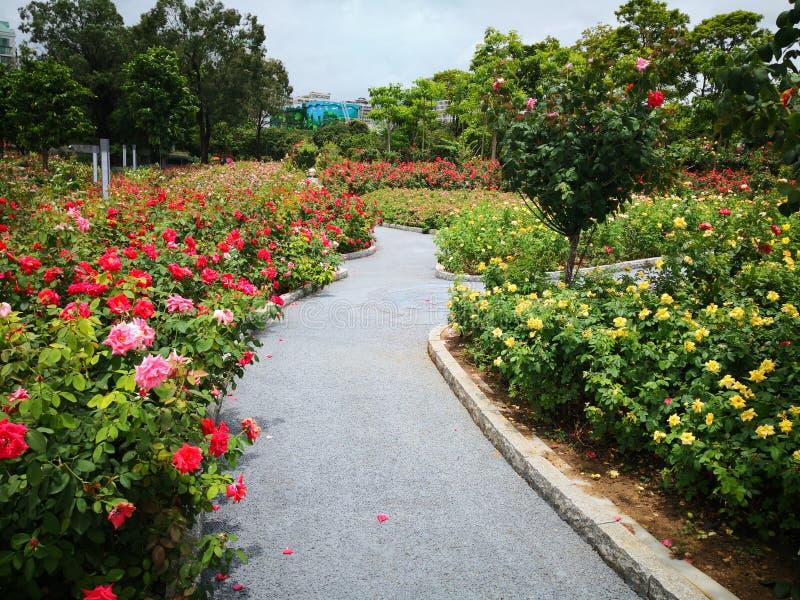 Una trayectoria fulled de flores fotos de archivo