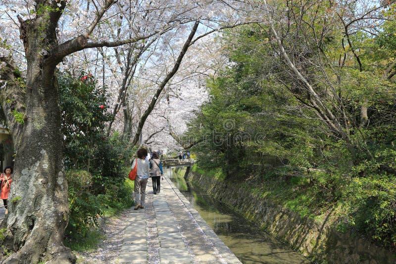 una trayectoria peatonal que sigue un canal cereza-árbol-alineado en Kyot imágenes de archivo libres de regalías