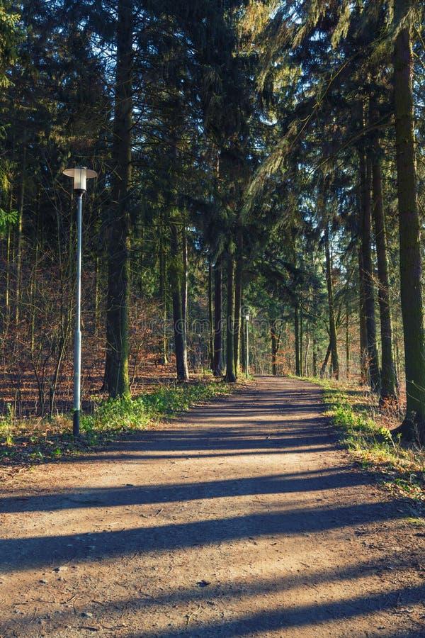 Una trayectoria sombría en el bosque fotos de archivo