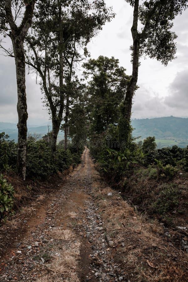 Una trayectoria a través de campos del café en la región colombiana del café en un área montañosa foto de archivo libre de regalías