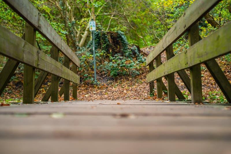 Una trayectoria a través de un pequeño bosque cerca del pueblo de Hude fotos de archivo