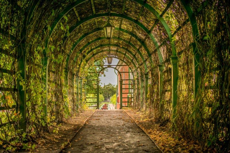 Una trayectoria a través de un túnel de la hiedra foto de archivo